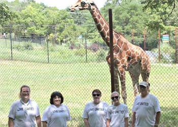 Team looking at a giraffe